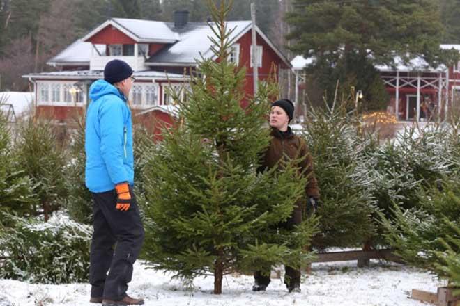 Julgranar på Sundö, Sundön joulukuuset